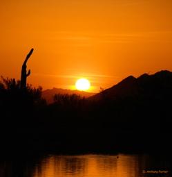 Saguaros_evening_prayers_edited2