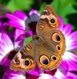 Butterfly_on_purple_2
